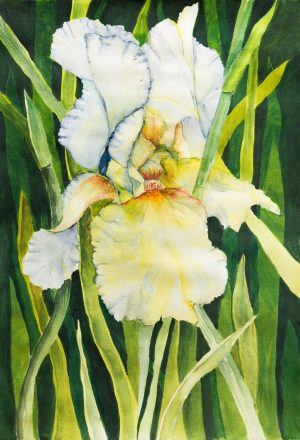 Artscape Studio Kathy Grundei Yellow Iris